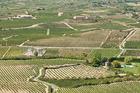 Vineyards, La Rioja