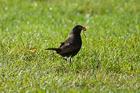The Early Bird. Hawkshead, Cumbria